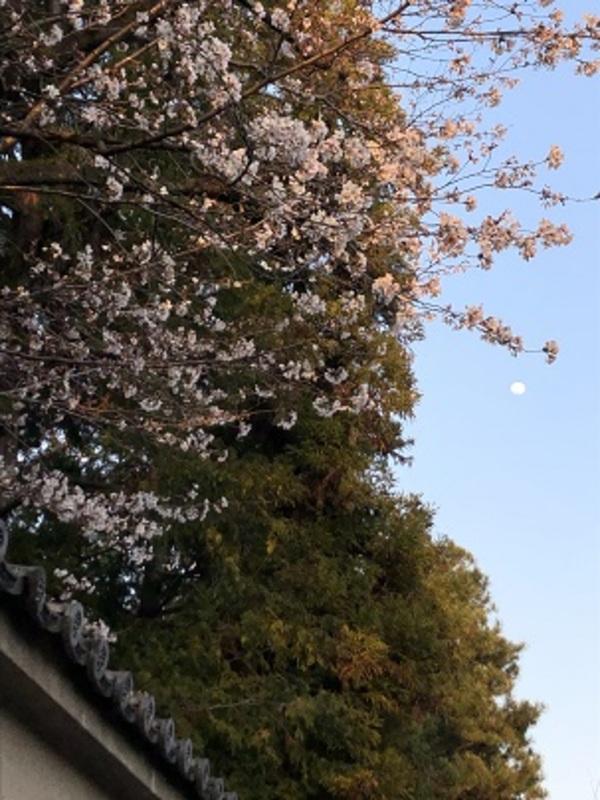 桜・青空・お月様